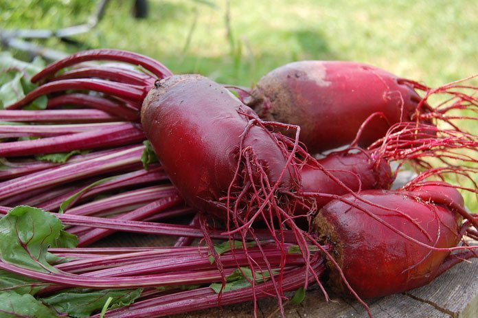 DOWN TO EARTH CROP: What do beets taste like? 3 #cookymom