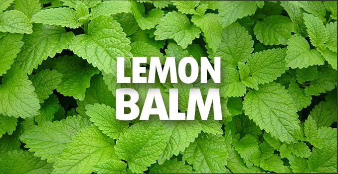 Lemongrass substitute Lemon Balm
