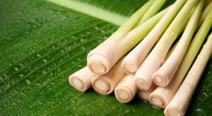 The Best Substitute For Lemongrass For Delicious Dishes