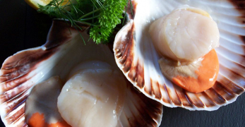 What Do Scallops Taste Like? Understanding the Bivalve Goodness Under the Sea